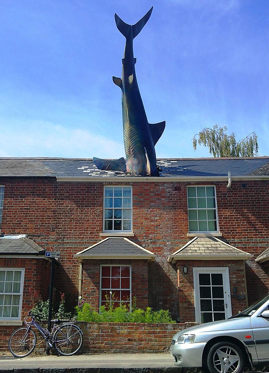 statue belle squalo oxford