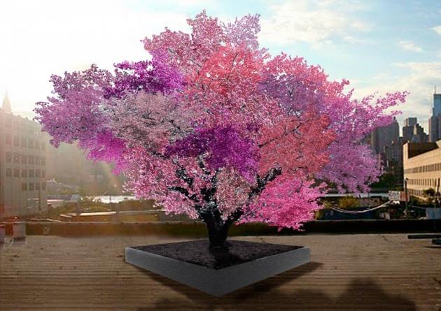 albero produce 40 tipi di frutta