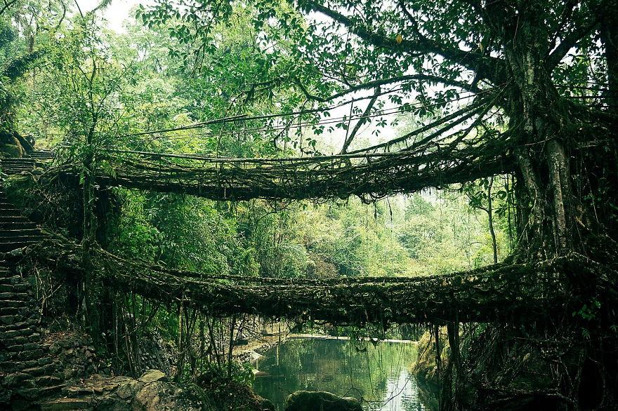 ponte di radici india