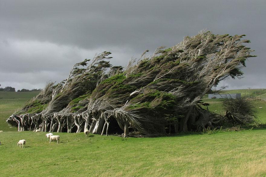 16 dei pi begli alberi al mondo for Alberi simili alle querce