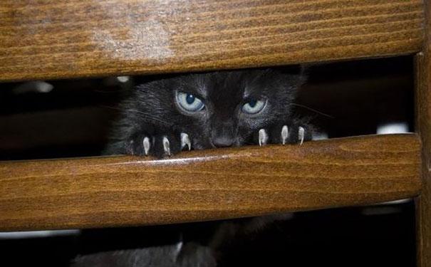 gatto malvagio