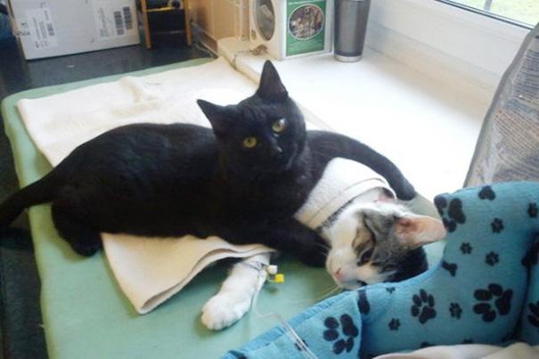 gatto cura altri animali