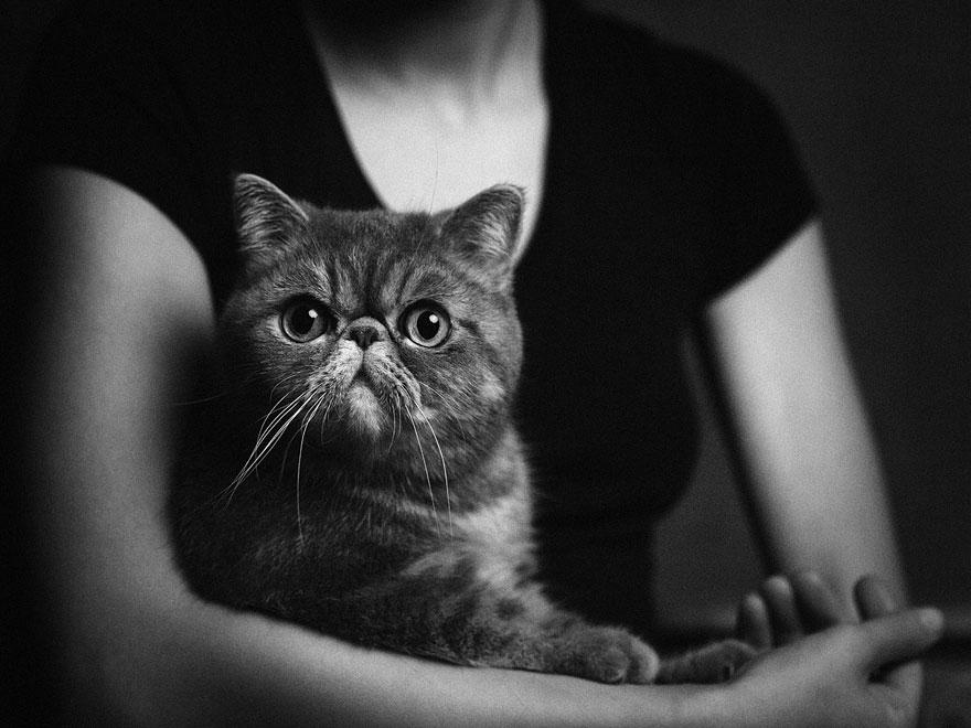 animali con espressione da umano