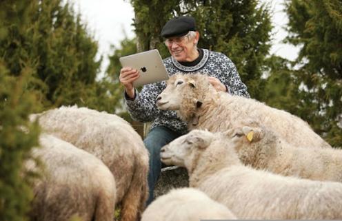 pecore ipad
