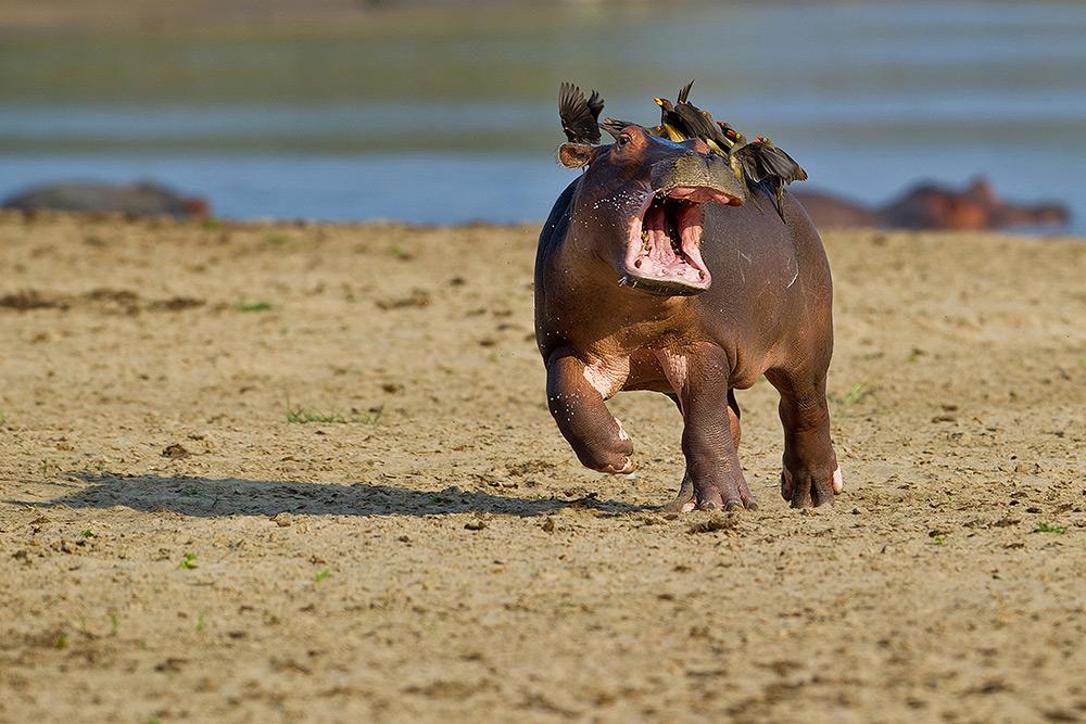 foto animali divertenti