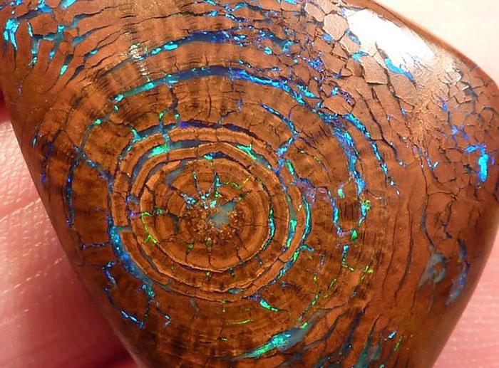 Fossile di Opale