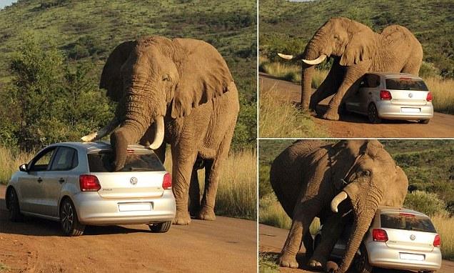 elefante si gratta