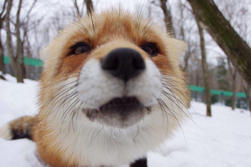fox village giappone