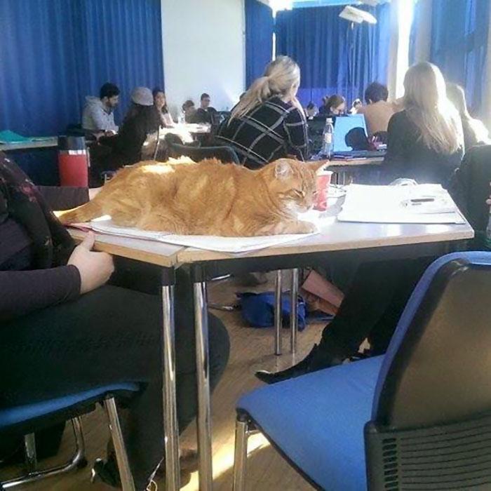 gatto università germania
