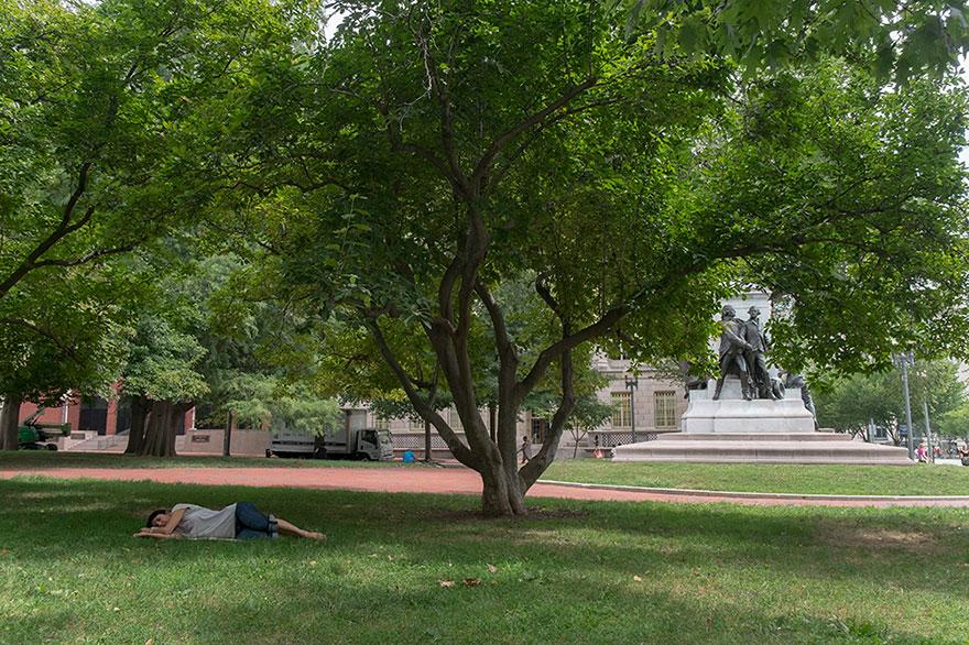 Albero davanti alla Casa Bianca