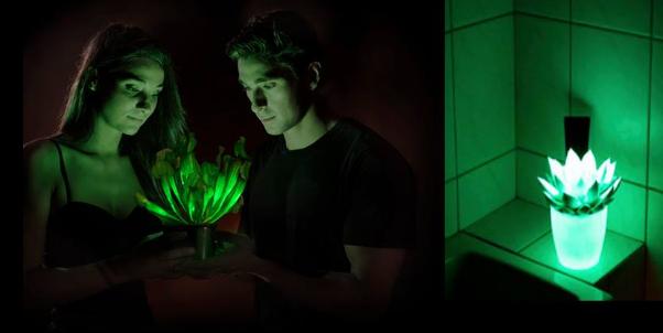 pianta che produce luce
