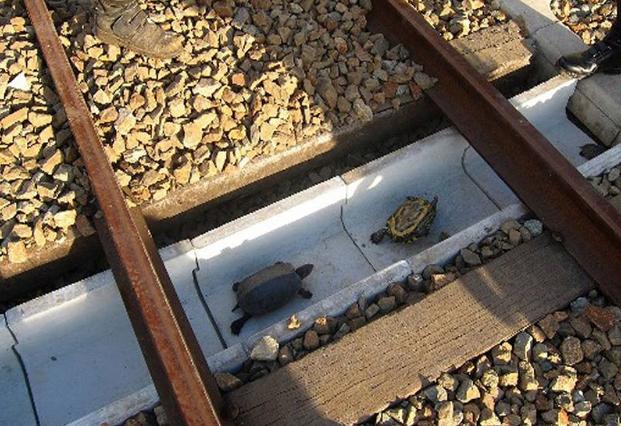 Tunnel per passaggio tartarughe