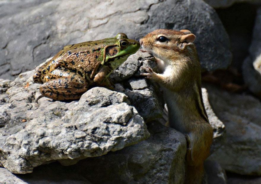Scoiattolo che bacia un rospo
