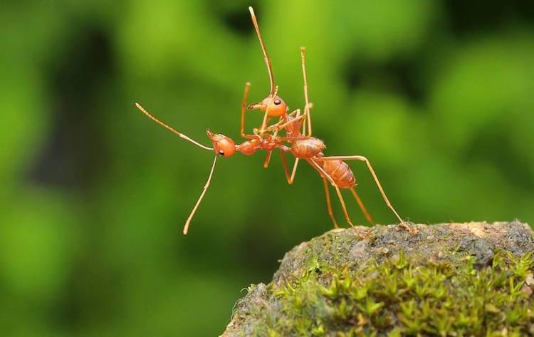 Formiche che danzano