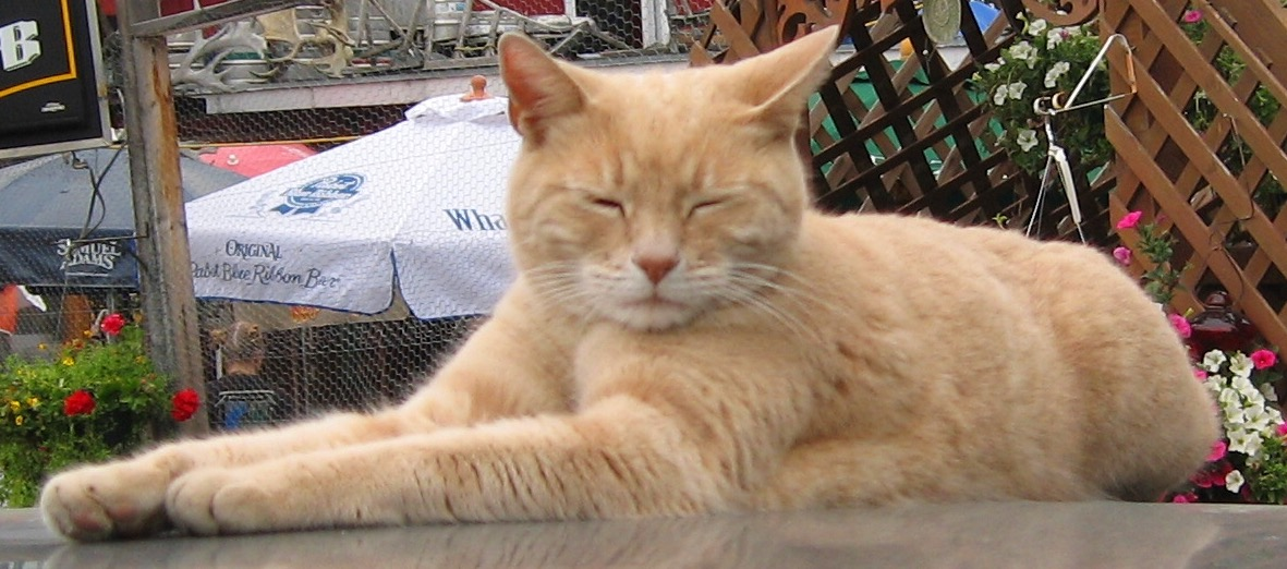 stubbs gatto sindaco in alaska