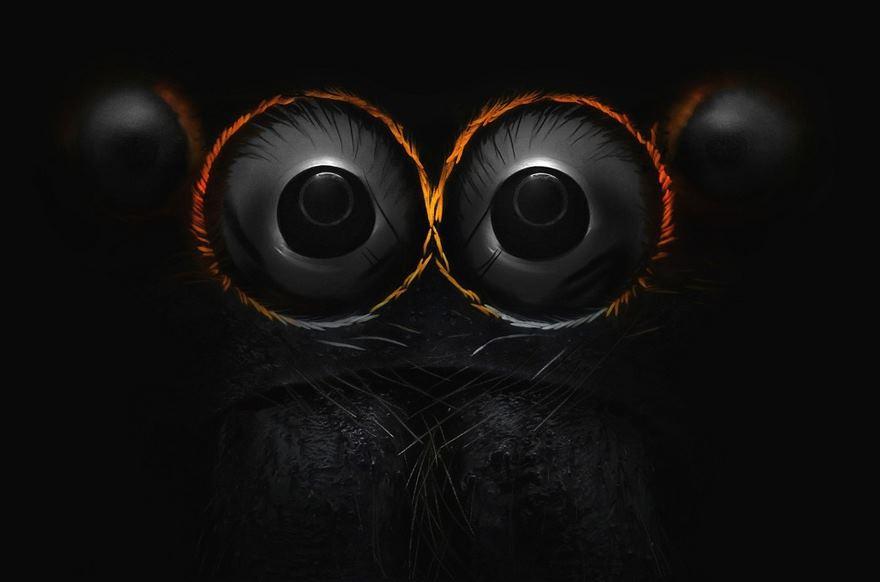 Occhi di un ragno saltatore