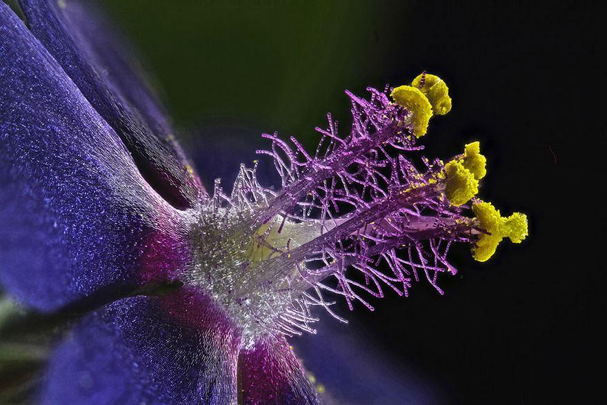 Stami di una anemone