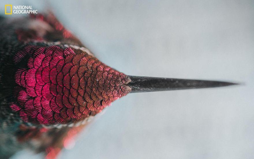Un cucciolo di colibrì visto dall'alto