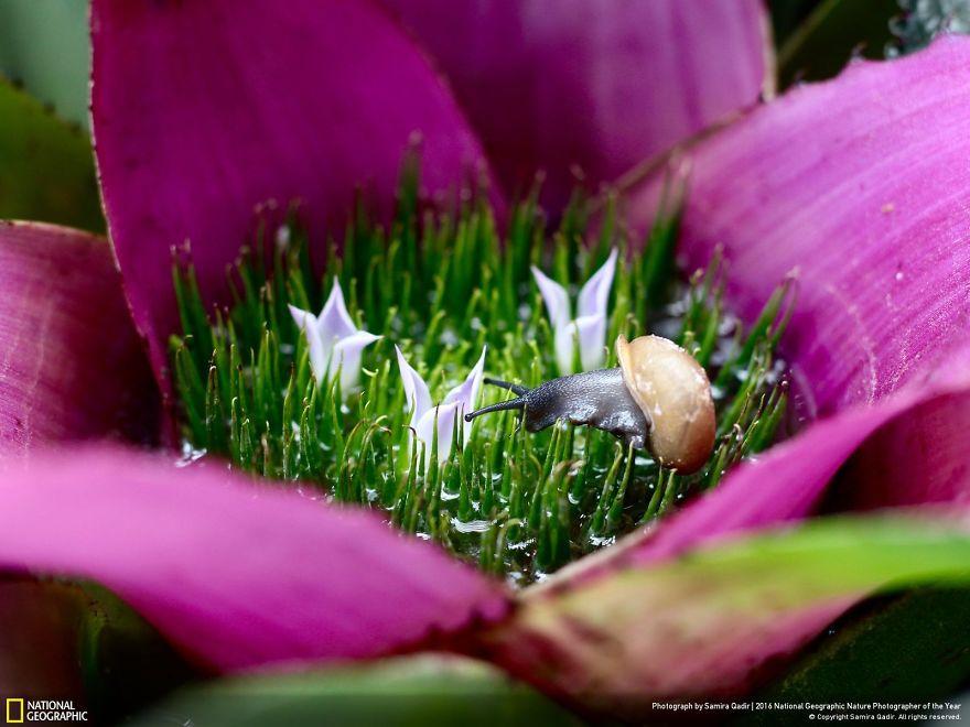 Fiore di Bromeliacee visto da vicino