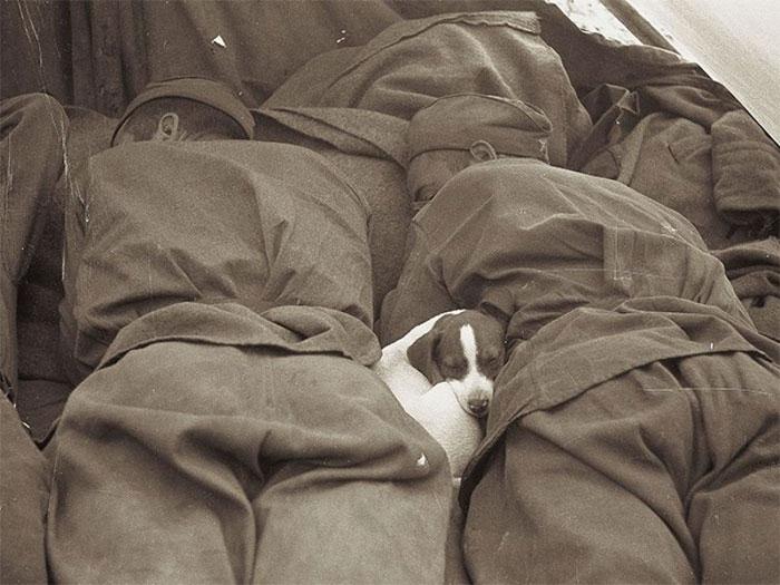 Soldati russi dormono con un cagnolino, Seconda Guerra Mondiale