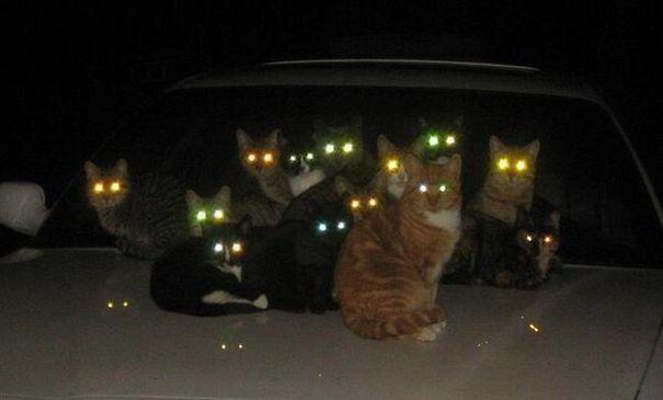 gatti demoni