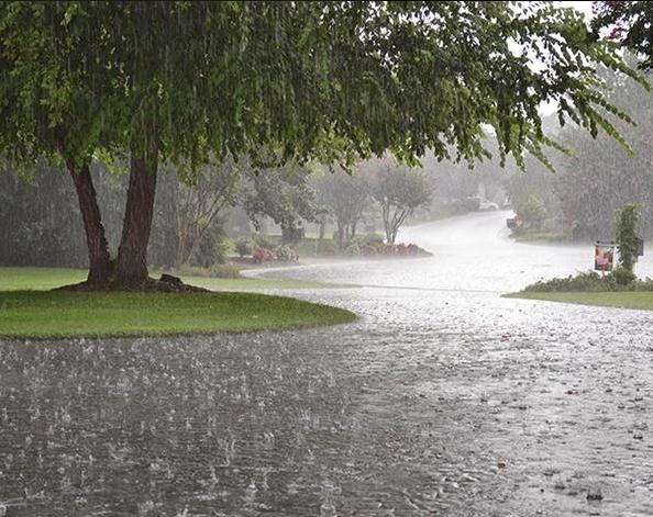 pioggia, odore