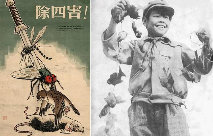 La campagna di Mao contro i passeri