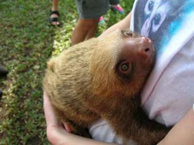 l'abbraccio dei bradipi