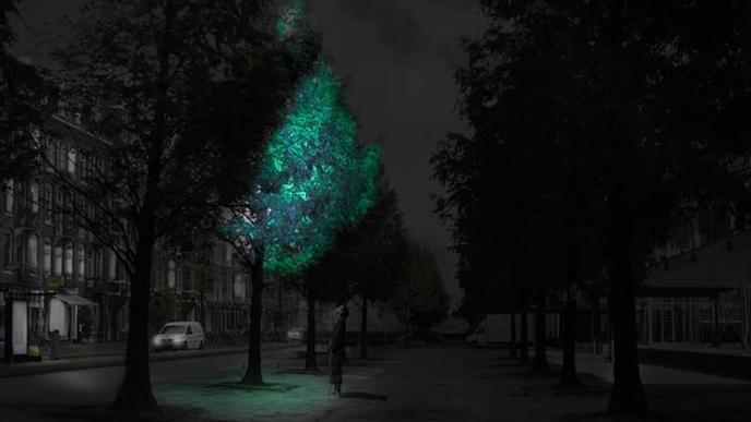 alberi bioluminescenti per illuminare le strade