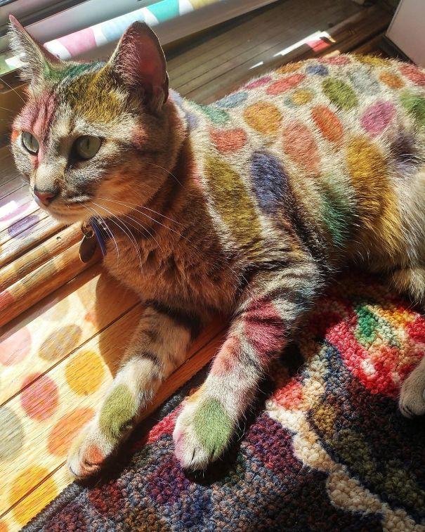 Il gatto illuminato da luci multicolori