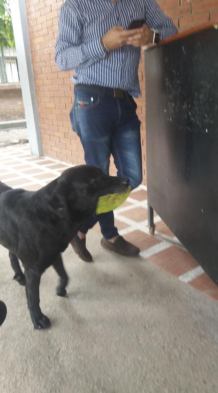 il cane che compra biscotti con delle foglie