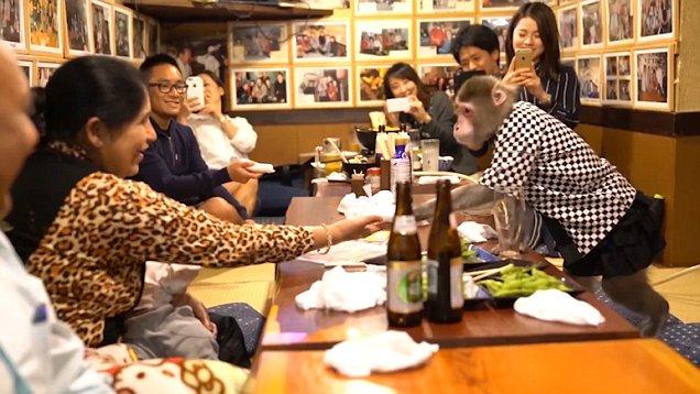 scimmia come cameriere