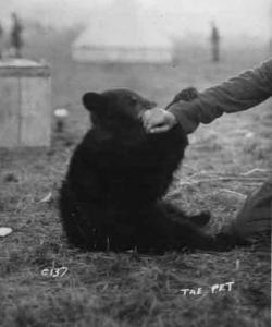 L'orsa Winnie