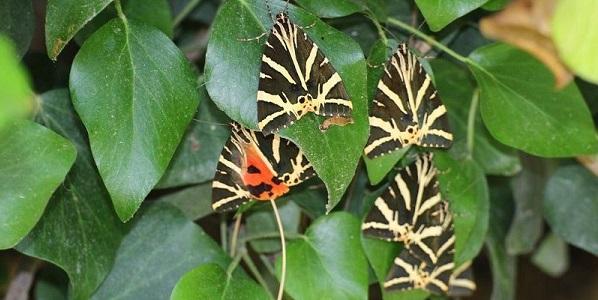 Petaloudes, la valle delle farfalle