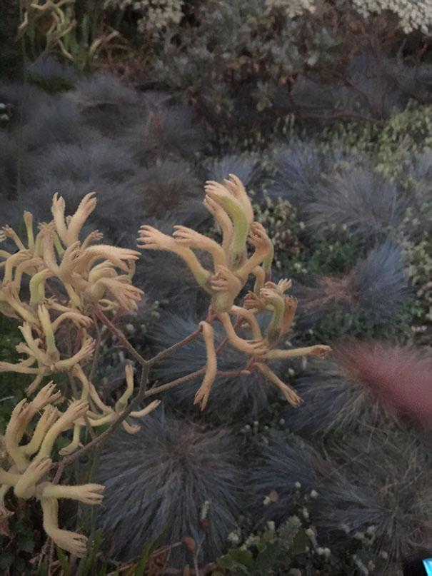 Una pianta che sembra aver tante piccole mani