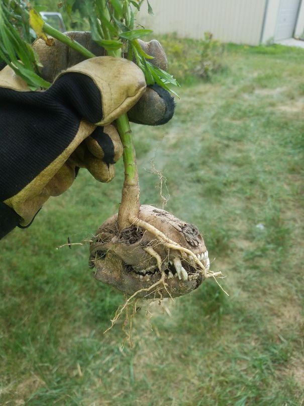 Una pianta cresciuta dentro al teschio di un piccolo animale