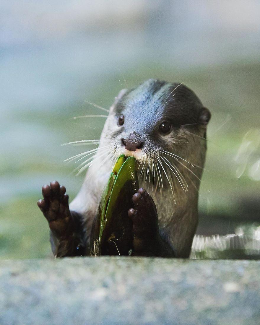 Le foto di animali di Robert Irwin