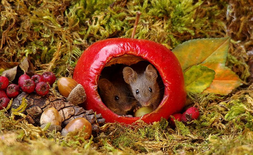 Villaggio di topolini selvatici