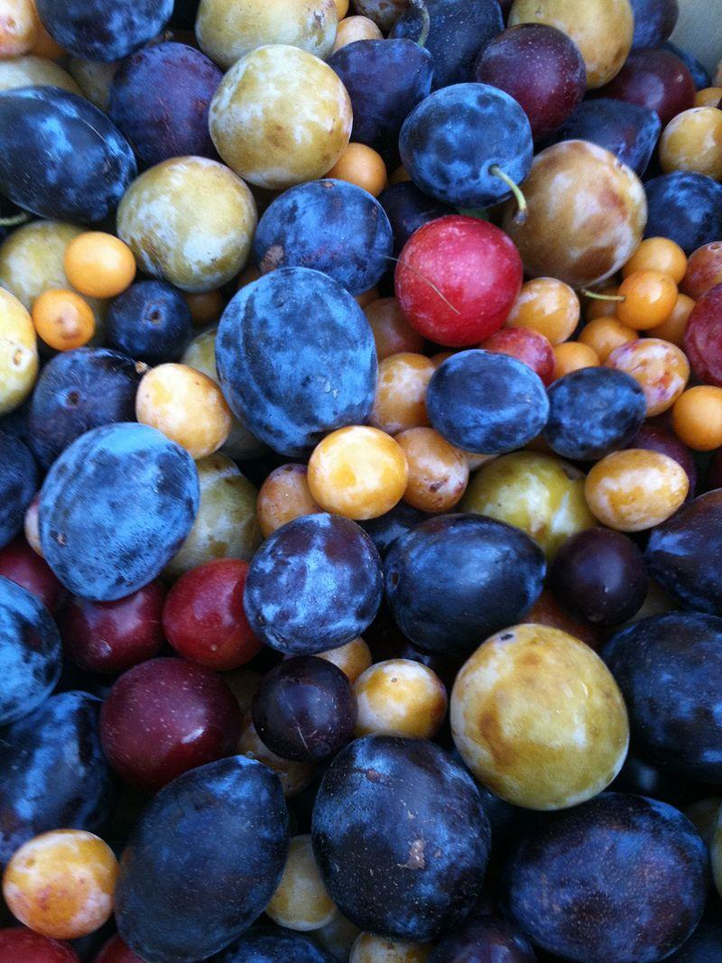 Albero che produce 40 tipi diversi di frutta