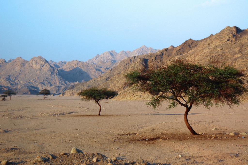 Deserto del Sinai