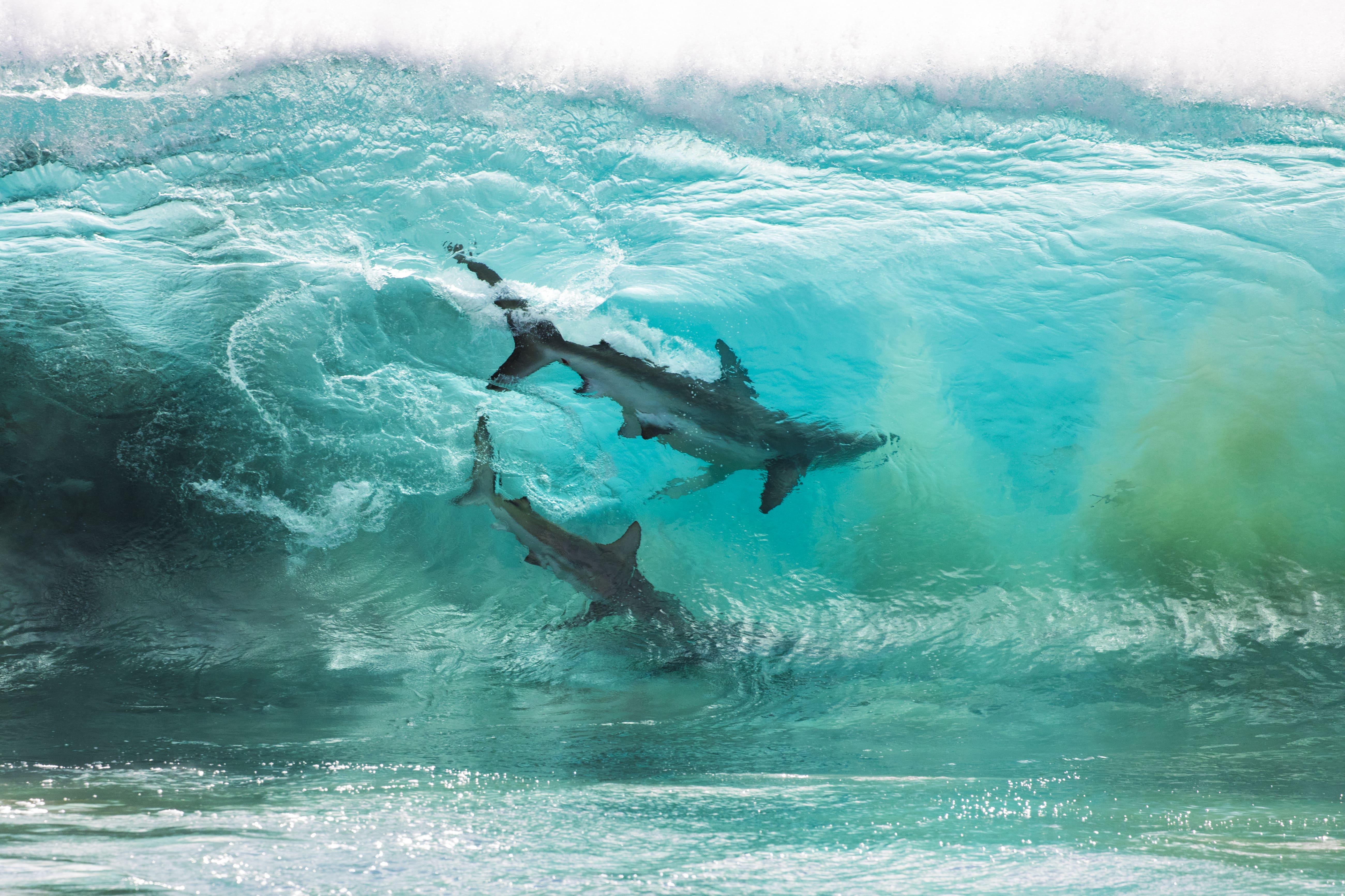 Squali dentro un'onda