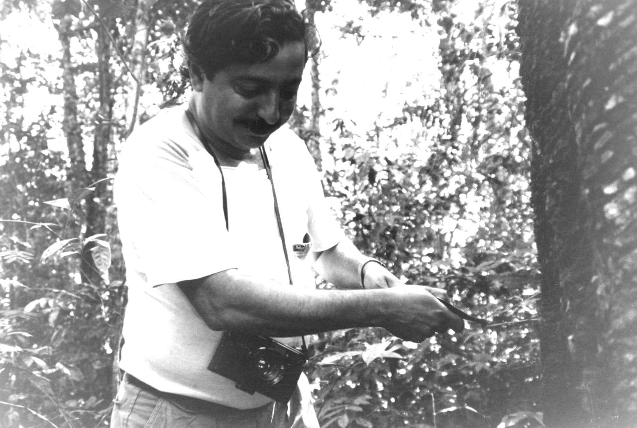 Chico Mendes incide un albero della gomma nel luglio 1988
