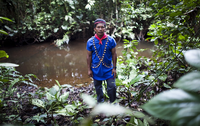 Foresta delle Amazzoni