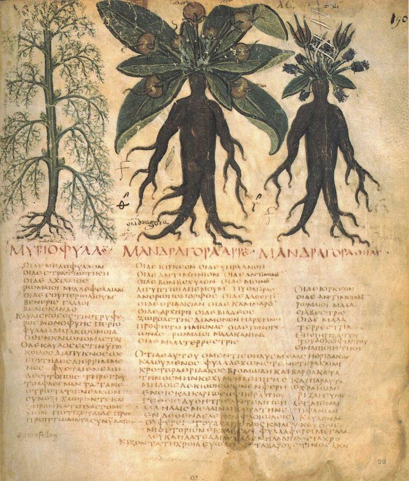 De Materia Medica di Dioscoride