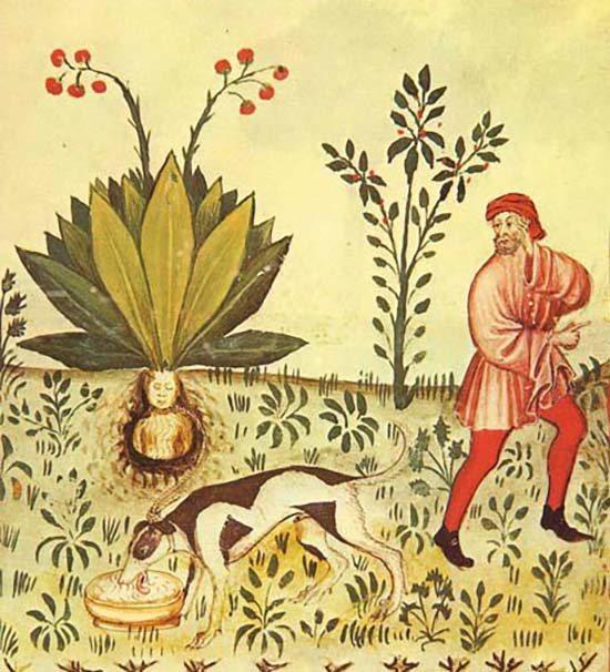 Illustrazione dal manoscritto Tacuinum Sanitatis, del XV secolo