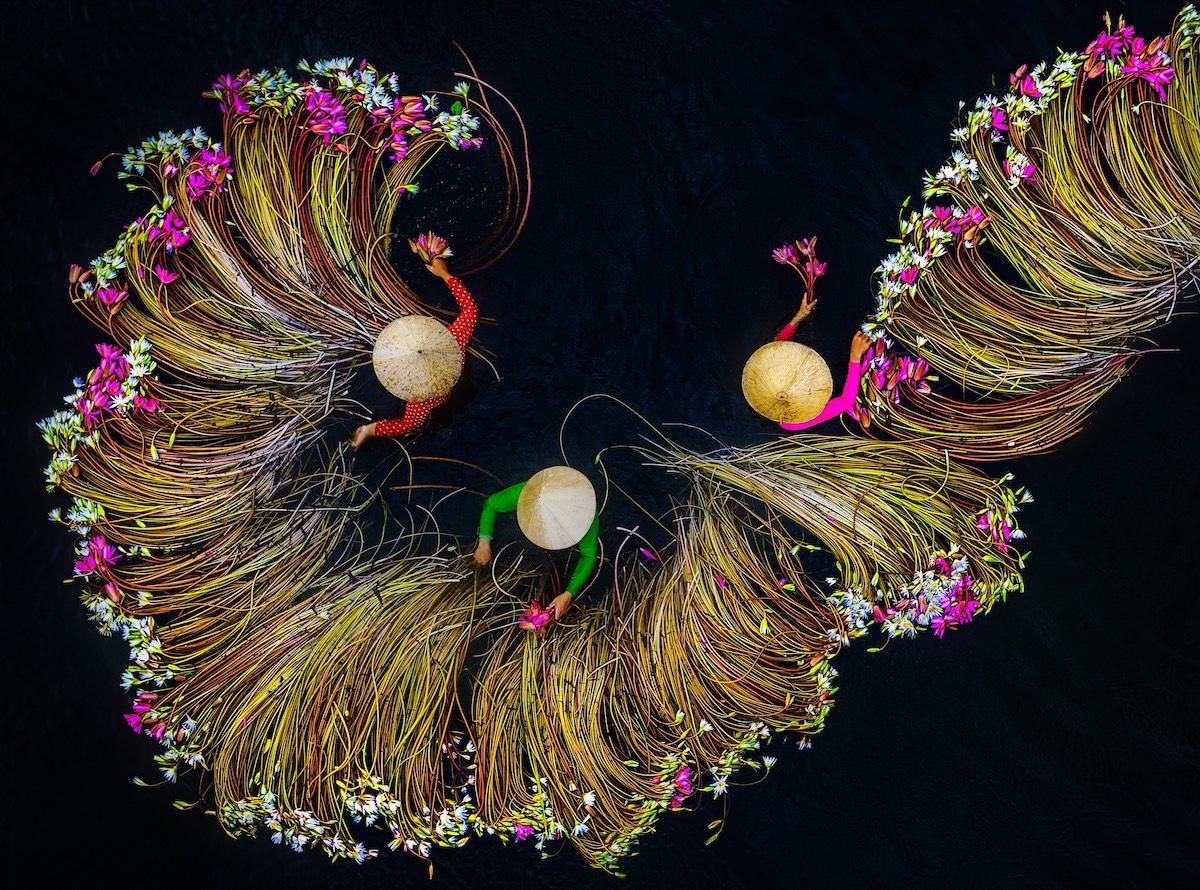 raccolta dei gigli nel delta del fiume Mekong