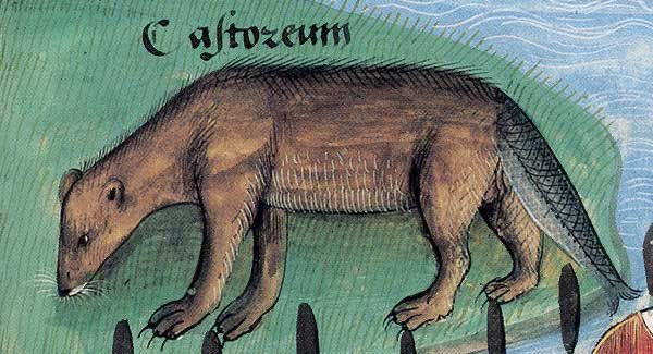 Castoro (con una coda di pesce). Dal Livre des Simples Médecines